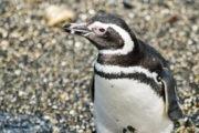 canal beagle hasta la pinguinera