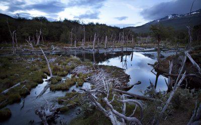 8 fotos que te harán enamorar del Parque Nacional Tierra del Fuego