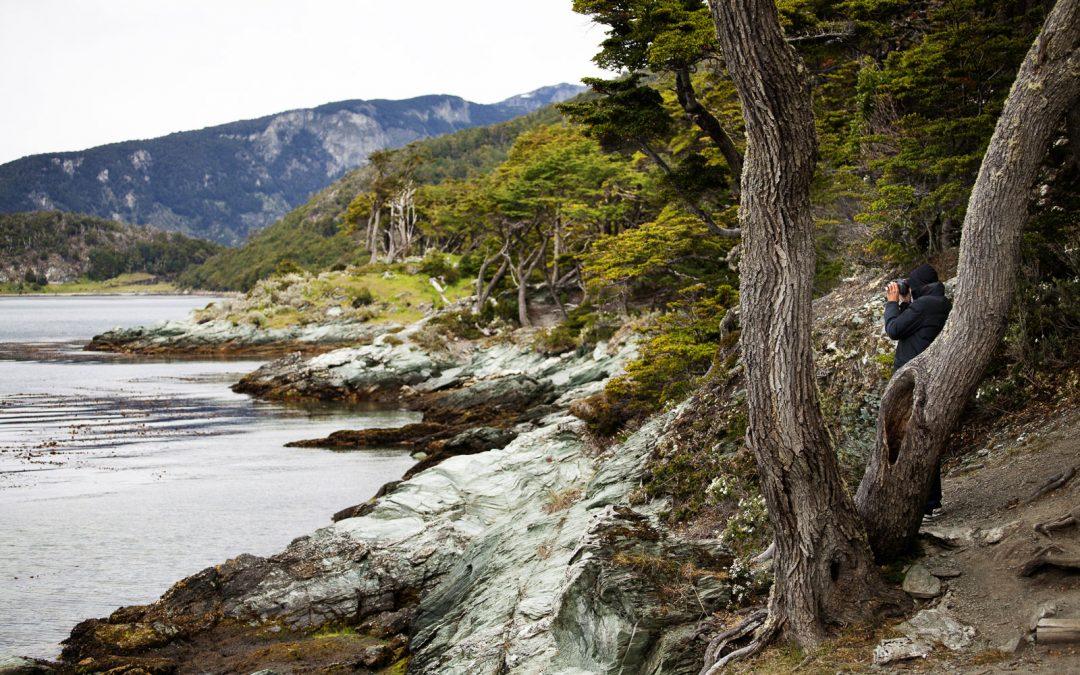 Flora y fauna en el Parque Nacional Tierra del Fuego