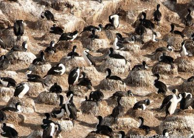 Cmpromiso-Onashaga-Isla-de-Pájaros-