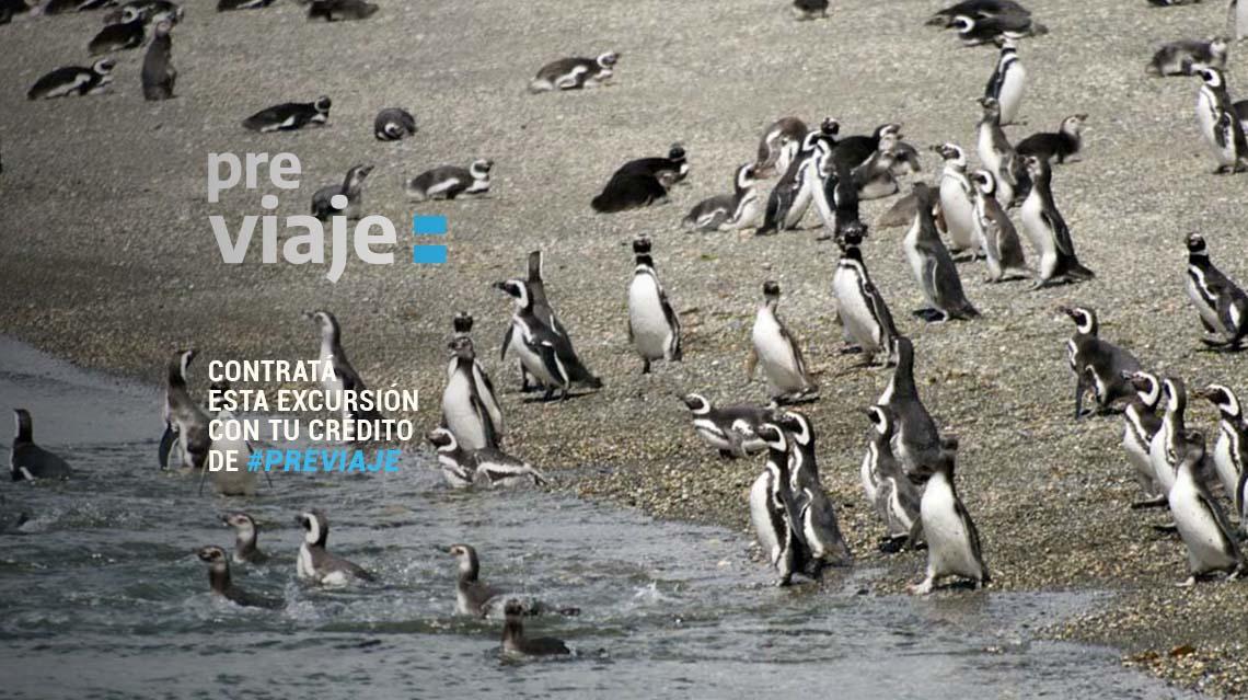 Pre Viaje 2021 - El Calafate y Ushuaia por Tolkeyen Patagonia Turismo